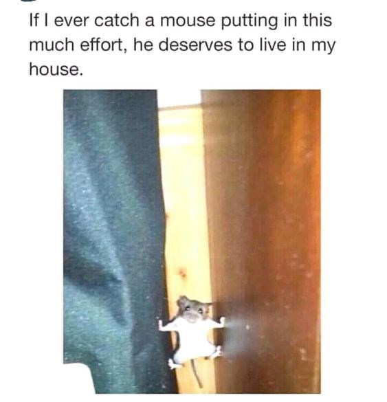 If I ever catch a mouse putting in this much effort, he deserves to live in my house.