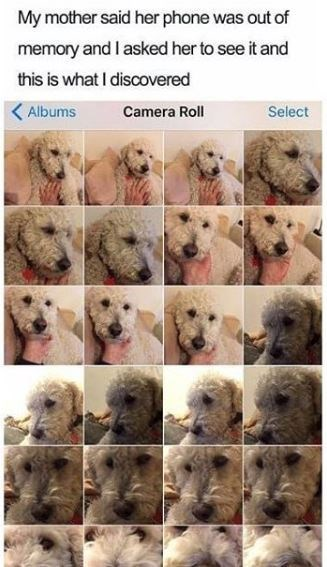 Dog breed - My mother said her phone was out of memory and I asked her to see it and this is what I discovered Albums Camera Roll Select