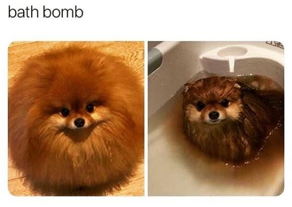 Dog - bath bomb