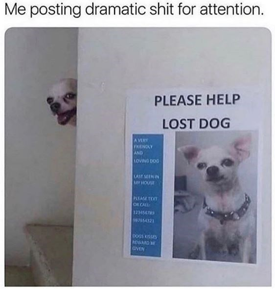 Canidae - Me posting dramatic shit for attention. PLEASE HELP LOST DOG AVERY oENOLY AND toviwG DoG KAST SEEN I YHOUSE PLEASE TO OR CALL 9754321 00GS KSSES EWARD EN
