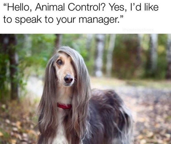 """Dog - """"Hello, Animal Control? Yes, I'd like to speak to your manager."""""""