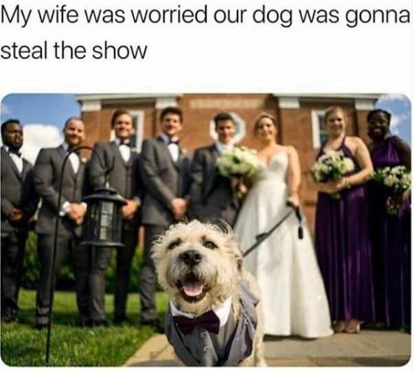 Dog - My wife was worried our dog was gonna steal the show