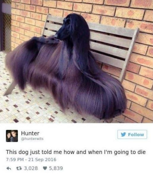 Hair - Hunter Follow hunterwits This dog just told me how and when I'm going to die 7:59 PM - 21 Sep 2016 t3,028 5,839
