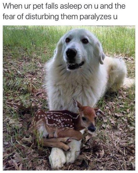 Mammal - When ur pet falls asleep on u and the fear of disturbing them paralyzes u Tank Siratro