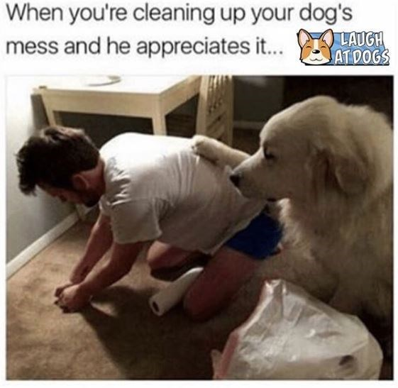 Dog - When you're cleaning up your dog's LAUGH ATDOGS mess and he appreciates i...