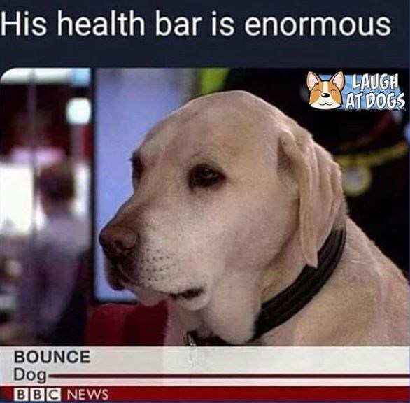 Dog - His health bar is enormous LAUGH ATDOGS BOUNCE Dog BBC NEWS