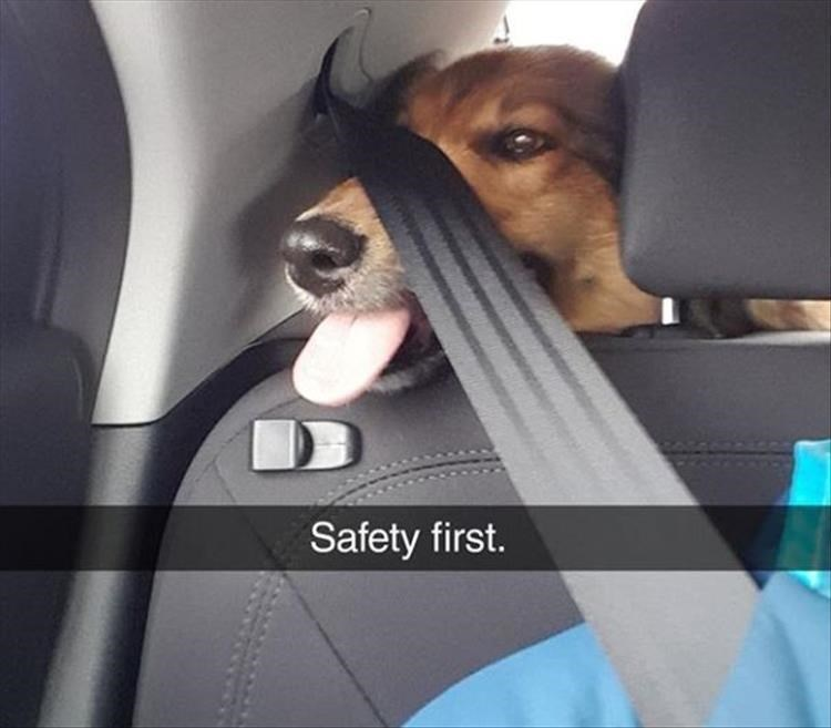 Canidae - Safety first.