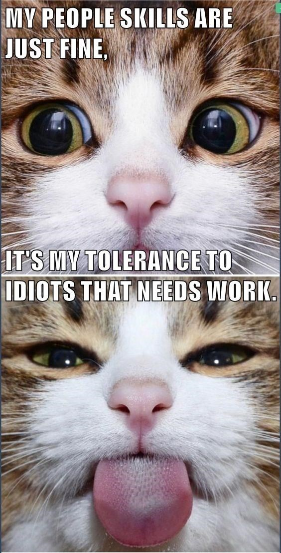 Cat - MY PEOPLE SKILLS ARE JUST FINE IT'S MY TOLERANCE TO IDIOTS THAT NEEDS WORK.