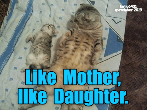 Cat - Ph bajio6401 speteimber 2019 Like Mother, lIke Daughter.