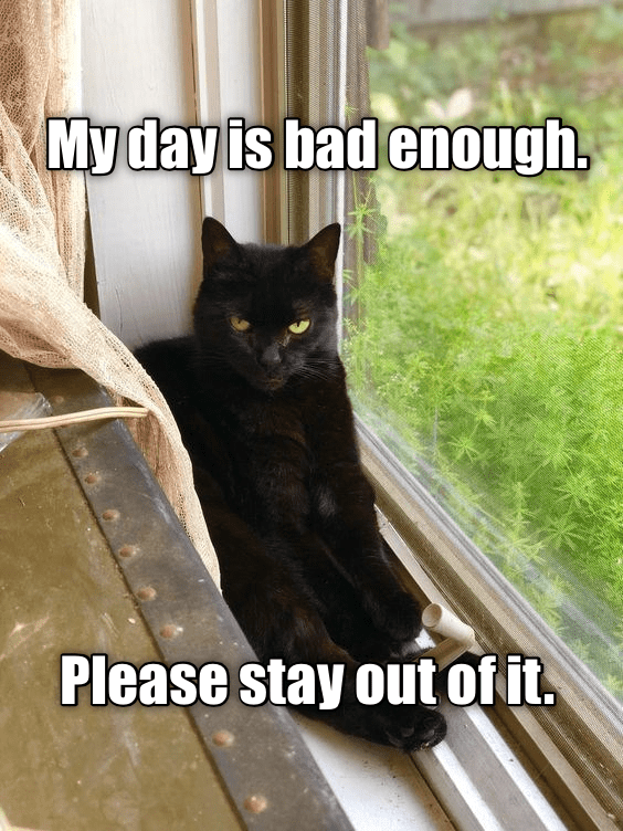 Cat - My day is bad enough. Please stay out ofit.