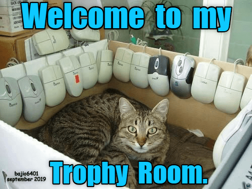 Cat - Welcome to my .Trophy Room, bajio6401 september 2019