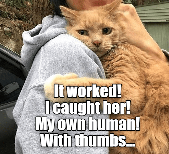 Cat - tworked! Icaught her! My own human! With thumbs..