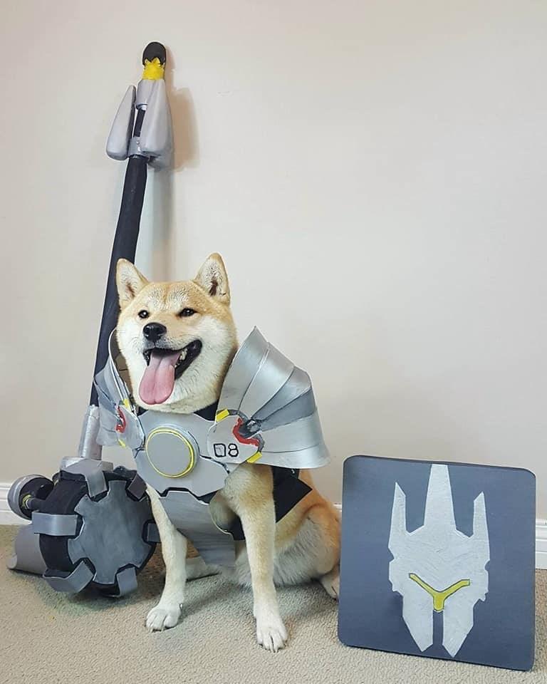 Dog - 08