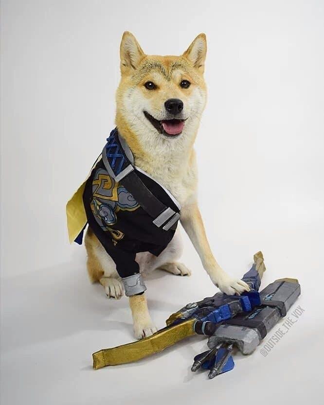 Dog - OUTSIDE THE VOX