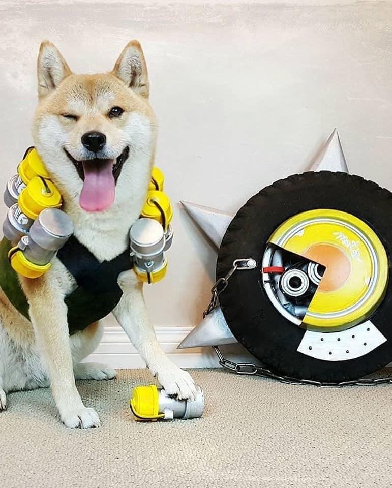 Dog - R