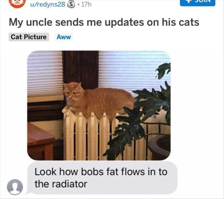 Product - u/redyns28 17h My uncle sends me updates on his cats Cat Picture Aww Look how bobs fat flows in to the radiator