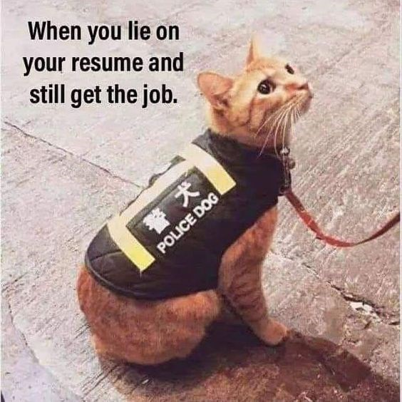 Cat - When you lie on your resume and still get the job. POLICE DOG