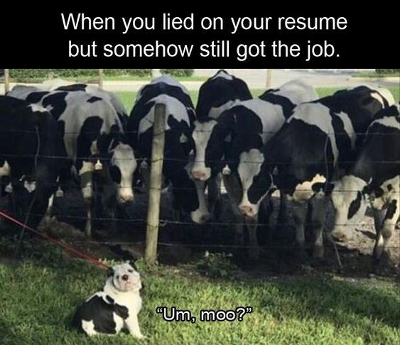 Dairy cow - When you lied on your resume but somehow stll got the job. Um, moo?