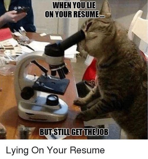 Cat - WHEN YOU LIE ON YOUR RESUME. BUTSTILL GETTHEJOB Lying On Your Resume