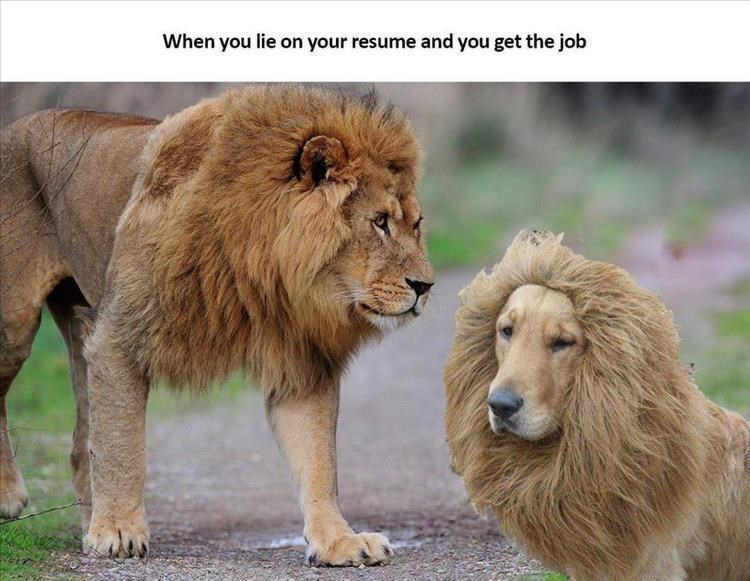 Mammal - When you lie on your resume and you get the job