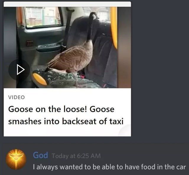 Adaptation - VIDEO Goose on the loose! Goose smashes into backseat of taxi God Today at 6:25 AM I always wanted to be able to have food in the car A