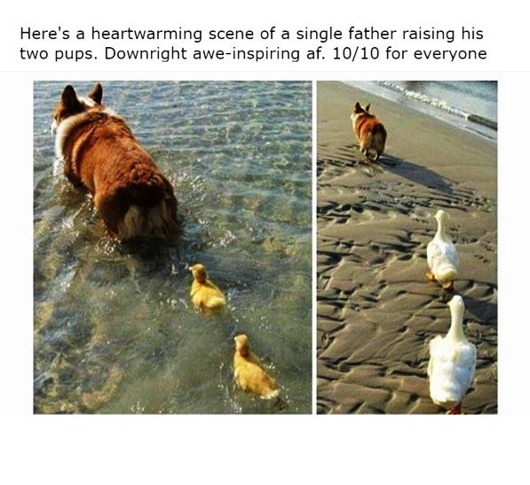 Dog - Here's a heartwarming scene of a single father raising his two pups. Downright awe-inspiring af. 10/10 for everyone