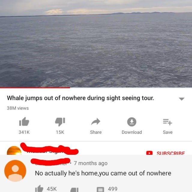 Text - Whale jumps out of nowhere during sight seeing tour. 38M views Share Download 341K 15K Save SUBSCRIRE 7 months ago No actually he's home,you came out of nowhere 45K 499