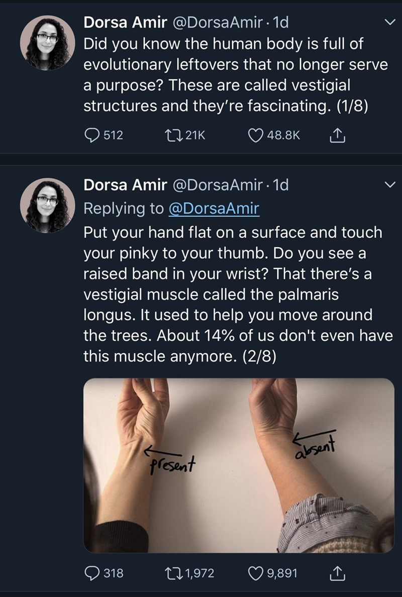 Text - Dorsa Amir @DorsaAmir 1d Did you know the human body is full of evolutionary leftovers that no longer serve a purpose? These are called vestigial structures and they're fascinating. (1/8) L21K 48.8K 512 Dorsa Amir @DorsaAmir 1d Replying to @DorsaAmir Put your hand flat on a surface and touch your pinky to your thumb. Do you see a raised band in your wrist? That there's a vestigial muscle called the palmaris longus. It used to help you move around the trees. About 14% of us don't even have