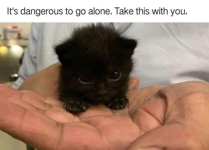 cat memes - 9368748800