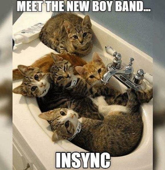 Cat - MEET THE NEW BOY BAND... INSYNC