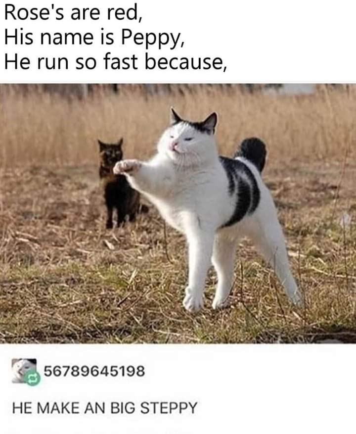 Cat - Rose's are red, His name is Peppy, He run so fast because, 56789645198 HE MAKE AN BIG STEPPY