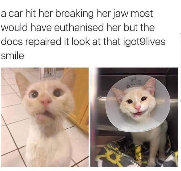 Cat - a car hit her breaking her jaw most would have euthanised her but the docs repaired it look at that igot9lives smile