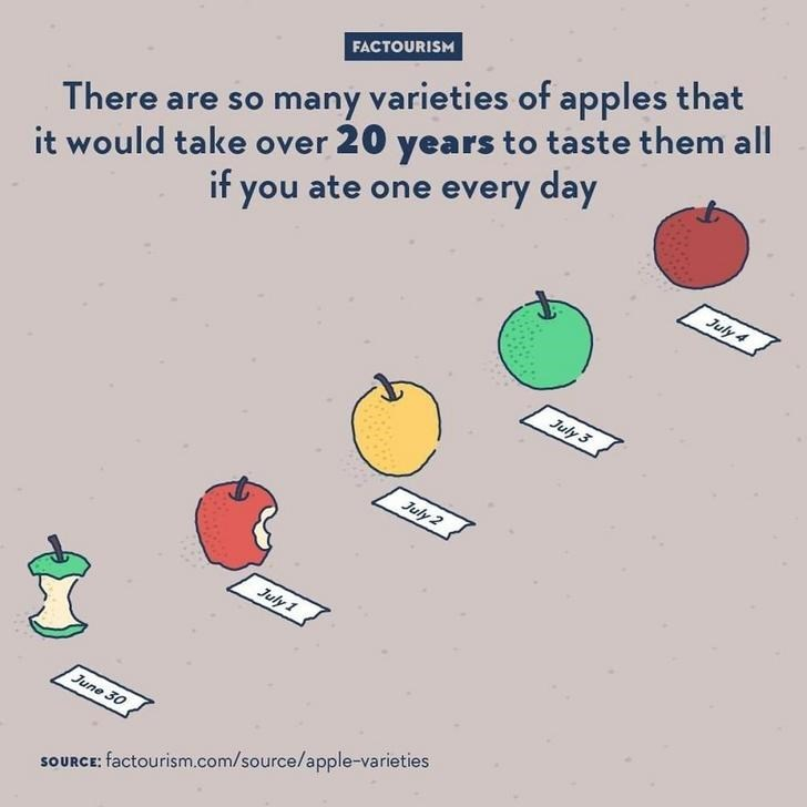 Text - it would take over 20 years to taste them all if you ate one every day FACTOURISM There are so many varieties of apples that July 4 July 3 July 2 July 1 June 30 SOURCE: factourism.com/source/apple-varieties