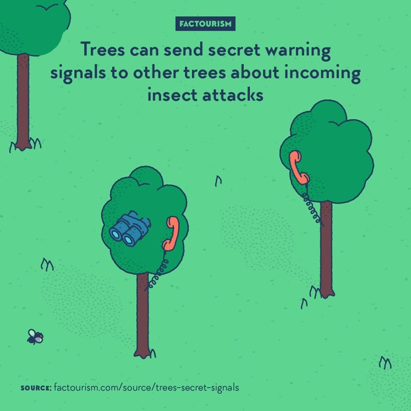 Organism - FACTOURISM Trees can send secret warning signals to other trees about incoming insect attacks M SOURCE: factourism.com/source/trees-secret-signals