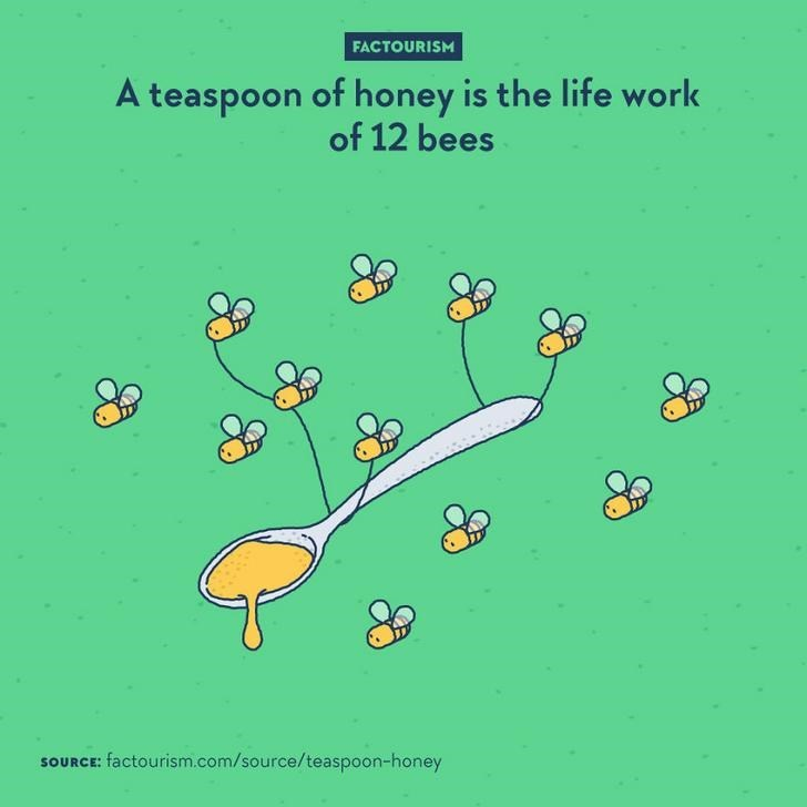 Text - FACTOURISM A teaspoon of honey is the life work of 12 bees SOURCE: factourism.com/source/teaspoon-honey