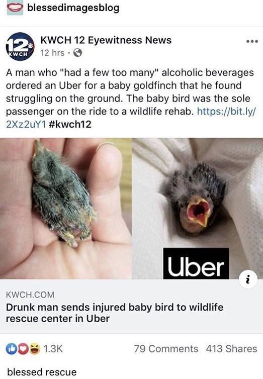 """Organism - blessedimagesblog 12 KWCH 12 Eyewitness News 12 hrs WCH A man who """"had a few too many"""" alcoholic beverages ordered an Uber for a baby goldfinch that he found struggling on the ground. The baby bird was the sole passenger on the ride to a wildlife rehab. https://bit.ly/ 2X 2UY1 #kwch12 Uber KWCH.COM Drunk man sends injured baby bird to wildlife rescue center in Uber 1.3K 79 Comments 413 Shares blessed rescue"""