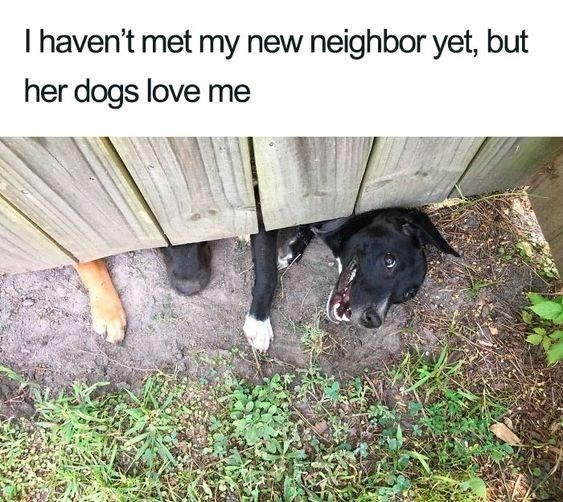 Canidae - I haven't met my new neighbor yet, but her dogs love me
