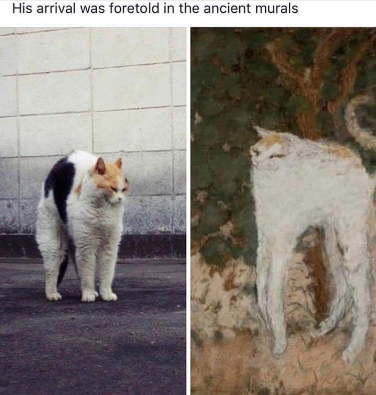 cat memes - 9368963584