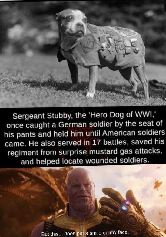 Text - ST Sergeant Stubby, the 'Hero Dog of WWI, once caught a German soldier by the seat of his pants and held him until American soldiers came. He also served in 17 battles, saved his regiment from surprise mustard gas attacks, and helped locate wounded soldiers. But this... does put a smile on my face.