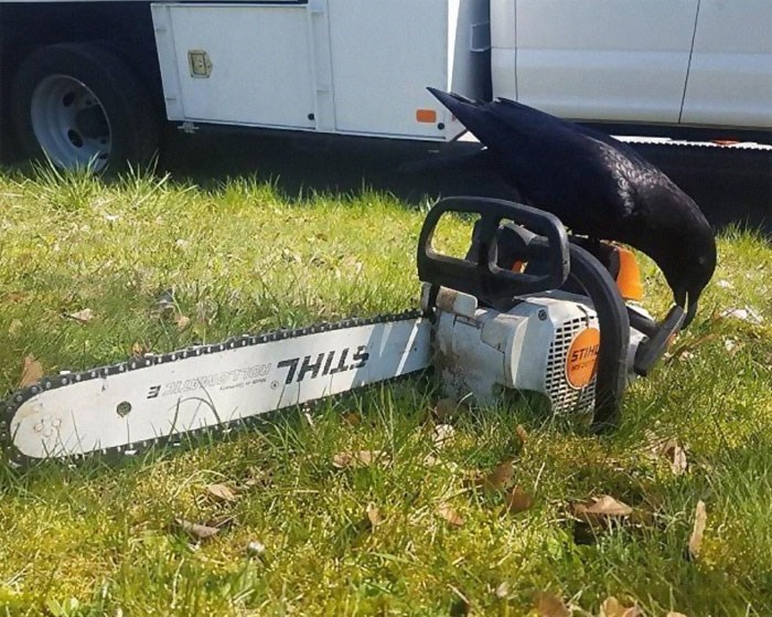 Chainsaw - 7HILS STIHD