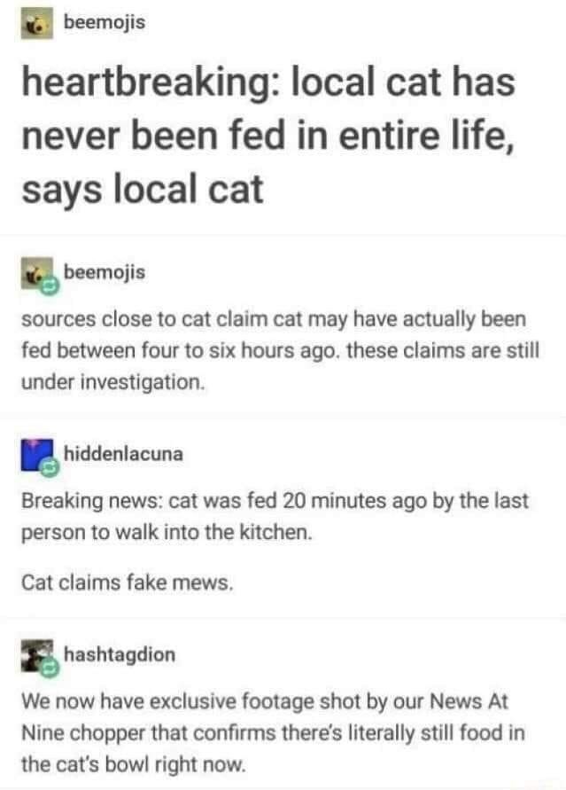 Text - beemojis heartbreaking: local cat has never been fed in entire life, says local cat beemojis sources close to cat claim cat may have actually been fed between four to six hours ago. these claims are still under investigation. hiddenlacuna Breaking news: cat was fed 20 minutes ago by the last person to walk into the kitchen. Cat claims fake mews. hashtagdion We now have exclusive footage shot by our News At Nine chopper that confirms there's literally still food in the cat's bowl right now