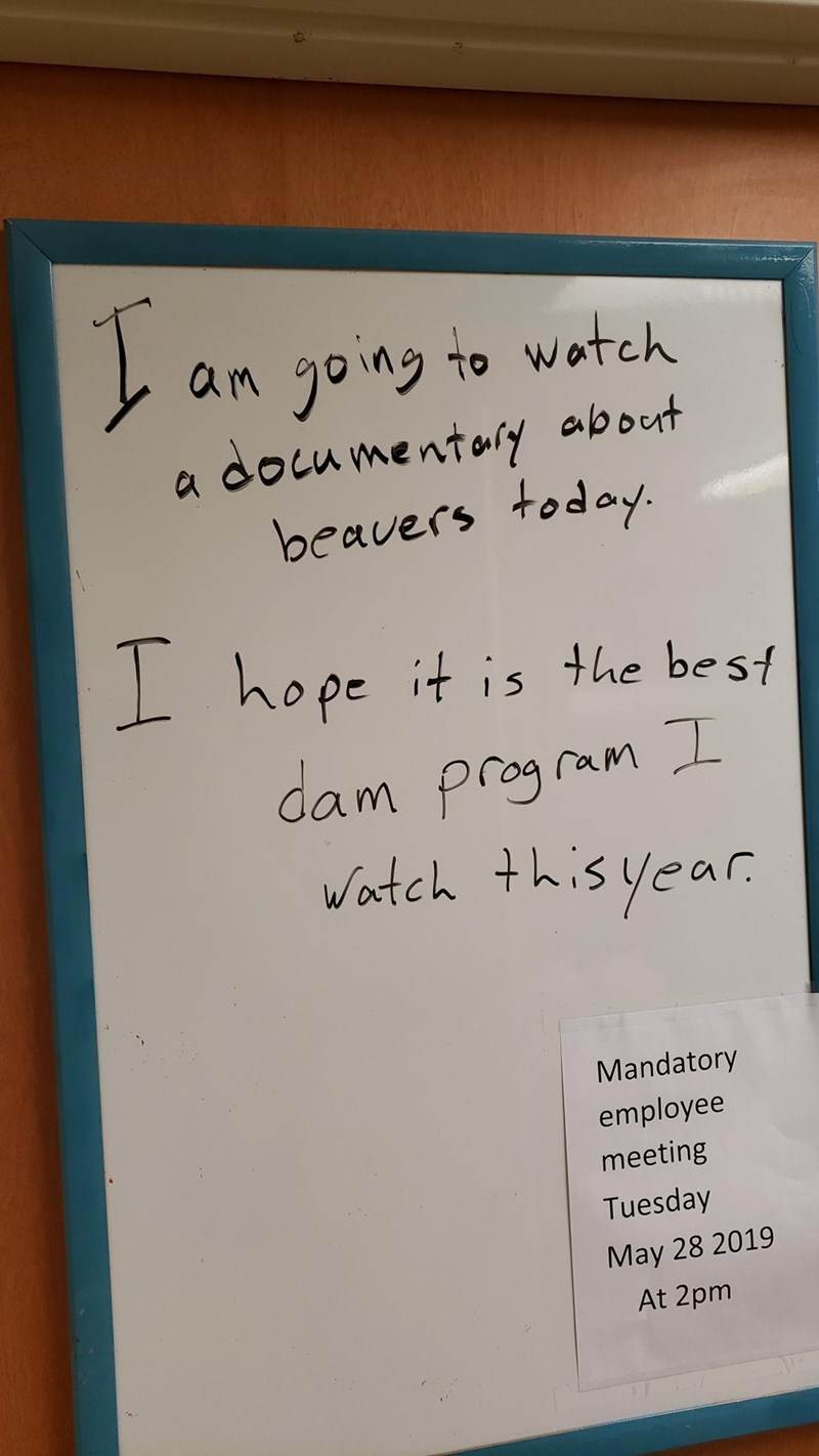 Text - an yoing to wotch documentory about beavers today. a hope it is the best dam program I Watch this year Mandatory employee meeting Tuesday May 28 2019 At 2pm