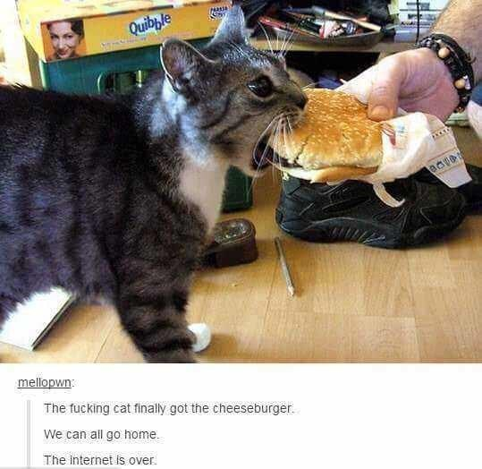 Cat - Quibble mellopwn The fucking cat finally got the cheeseburger. We can all go home. The internet is over.