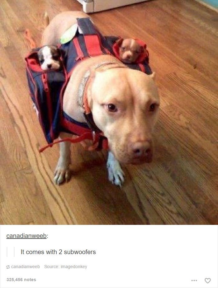 Dog - canadianweeb: It comes with 2 subwoofers canadianweeb Source: imagedonkey 325,456 notes