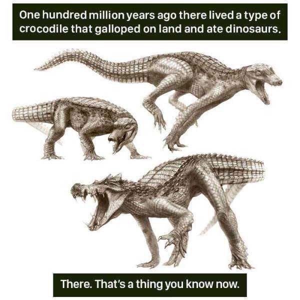 Animal figure - One hundred million years ago there lived a type of crocodile that galloped on land and ate dinosaurs. There. That's a thing you know now.