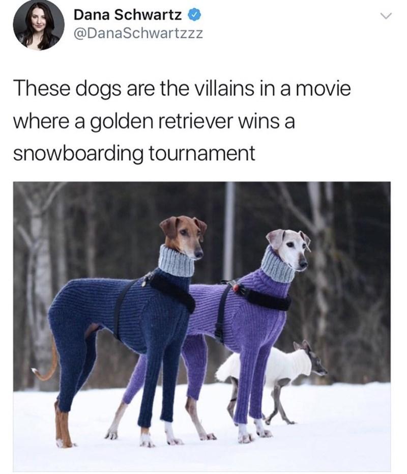 Vertebrate - Dana Schwartz @DanaSchwartzzz These dogs are the villains in a movie where a golden retriever wins a snowboarding tournament