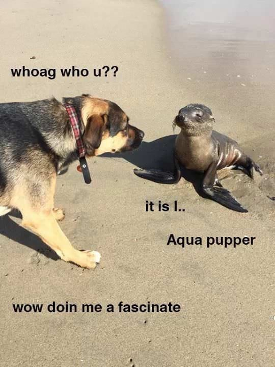 Dog - whoag who u?? it is I. Aqua pupper woW doin me a fascinate