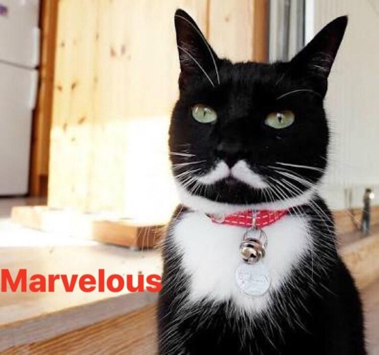 Cat - Marvelous