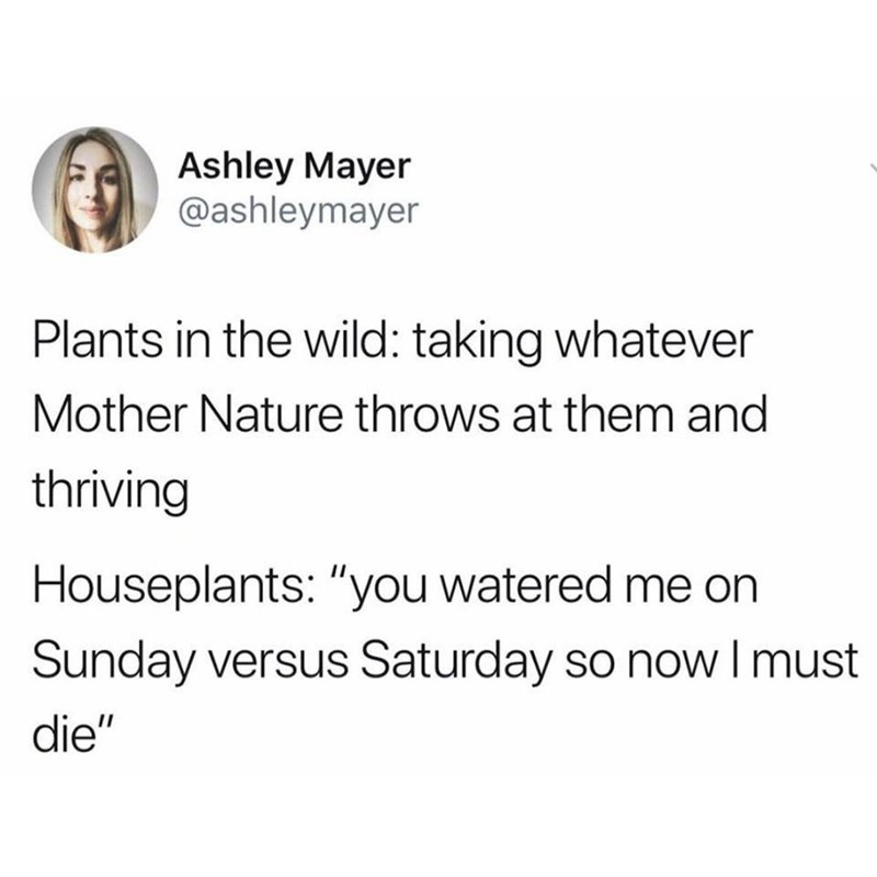 """Text - Ashley Mayer @ashleymayer Plants in the wild: taking whatever Mother Nature throws at them and thriving Houseplants: """"you watered me on Sunday versus Saturday so now I must die"""""""