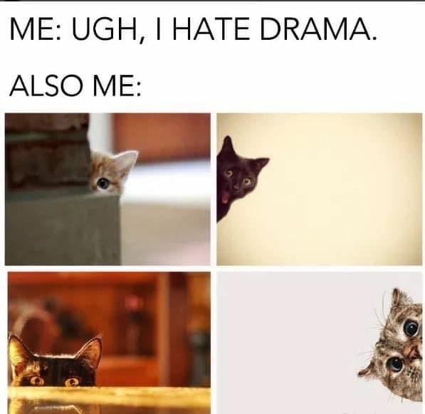 Cat - ME: UGH, I HATE DRAMA ALSO ME:
